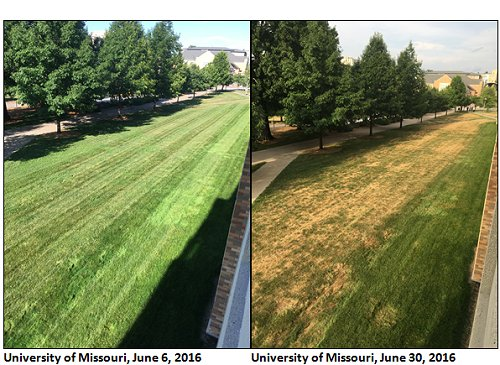 Comparison pictures of University of Missouri lawn on June 6, 2016 & June 30, 2016